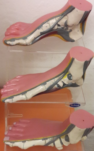 Chiropody and podiatry practice with extensive range of complimentary treatments including orthotics, surgical shoe-making and massage therapy